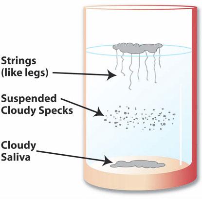 saliva-test