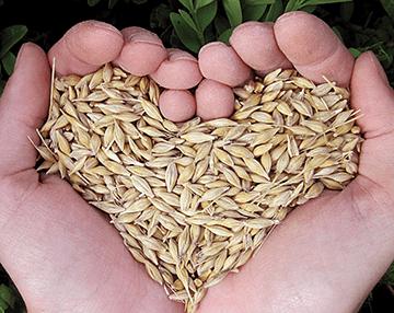 Globgal Health hands holding seeds